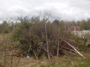 вывезти травы, ветки и спиленные деревья