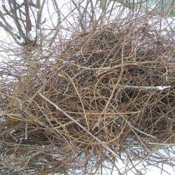 Куда вывезти ветки и спиленные деревья в Ижевске?